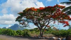 Mauritius copyright piotr nogal 20191129_155504