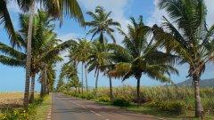 Mauritius copyright piotr nogal 20191201_090119