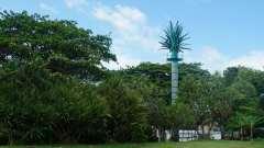 Mauritius copyright piotr nogal 20191201_090444