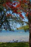 Mauritius copyright piotr nogal 20191201_101417
