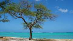 Mauritius copyright piotr nogal 20191201_103453