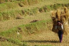 025-Nepal-annapurna-copyright-piotr-nogal
