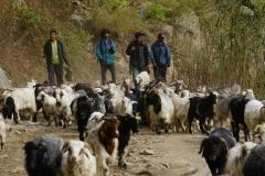 089-Nepal-annapurna-copyright-piotr-nogal