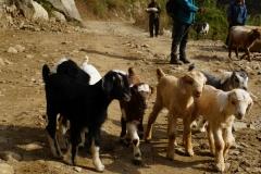 090-Nepal-annapurna-copyright-piotr-nogal