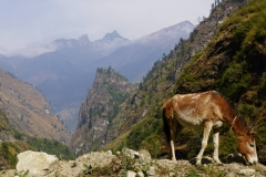 097-Nepal-annapurna-copyright-piotr-nogal