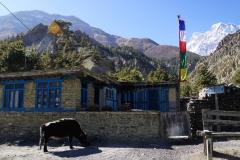 159-Nepal-annapurna-copyright-piotr-nogal