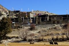 196-Nepal-annapurna-copyright-piotr-nogal