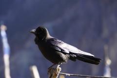 202-Nepal-annapurna-copyright-piotr-nogal
