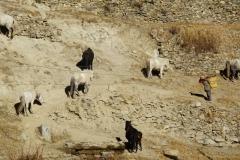 204-Nepal-annapurna-copyright-piotr-nogal