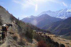 242-Nepal-annapurna-copyright-piotr-nogal