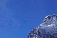 244-Nepal-annapurna-copyright-piotr-nogal