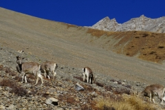 337-Nepal-annapurna-copyright-piotr-nogal