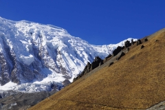 346-Nepal-annapurna-copyright-piotr-nogal