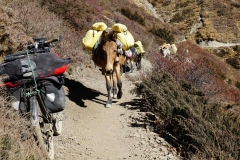 361-Nepal-annapurna-copyright-piotr-nogal