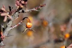 365-Nepal-annapurna-copyright-piotr-nogal