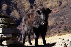 374-Nepal-annapurna-copyright-piotr-nogal