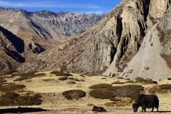 375-Nepal-annapurna-copyright-piotr-nogal