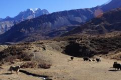 443-Nepal-annapurna-copyright-piotr-nogal