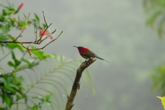 533-Nepal-annapurna-copyright-piotr-nogal