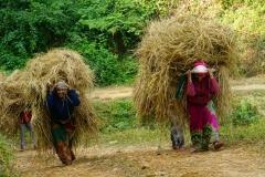 537-Nepal-annapurna-copyright-piotr-nogal