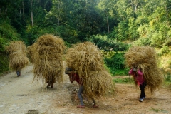 538-Nepal-annapurna-copyright-piotr-nogal
