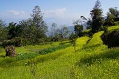 575-Nepal-annapurna-copyright-piotr-nogal