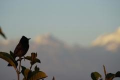607-Nepal-annapurna-copyright-piotr-nogal