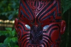 neuseeland nordinsel copyright piotr nogal 071