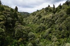 neuseeland nordinsel copyright piotr nogal 075