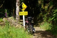 neuseeland nordinsel copyright piotr nogal 079