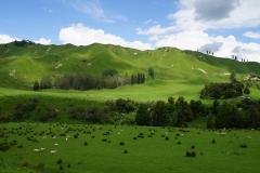 neuseeland nordinsel copyright piotr nogal 088