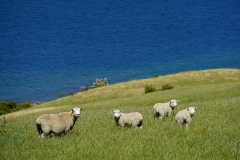 neuseeland sudinsel copyright piotr nogal 127