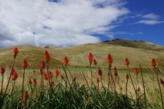 neuseeland sudinsel copyright piotr nogal 252