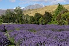 neuseeland sudinsel copyright piotr nogal 275