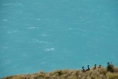 neuseeland sudinsel copyright piotr nogal 285