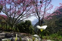 taiwan copyright piotr nogal 276