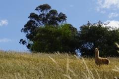 tasmanien 035 copyright piotr nogal