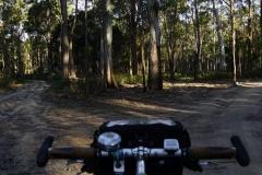 tasmanien 039 copyright piotr nogal
