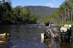 tasmanien 043 copyright piotr nogal