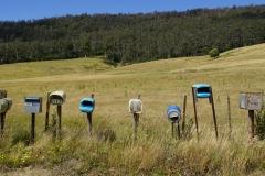 tasmanien 049 copyright piotr nogal