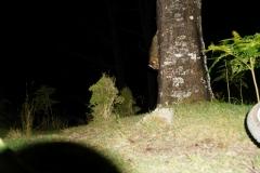 tasmanien 055 copyright piotr nogal