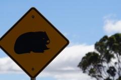 tasmanien 057 copyright piotr nogal