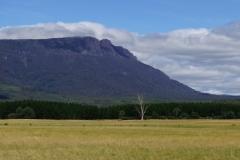 tasmanien 058 copyright piotr nogal