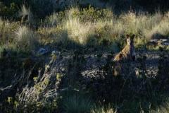 tasmanien 061 copyright piotr nogal