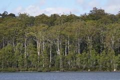 tasmanien 073 copyright piotr nogal