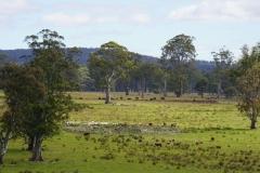 tasmanien 078 copyright piotr nogal