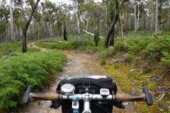 tasmanien 080 copyright piotr nogal