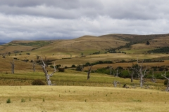 tasmanien 086 copyright piotr nogal