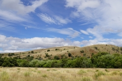 tasmanien 089 copyright piotr nogal