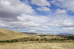 tasmanien 092 copyright piotr nogal
